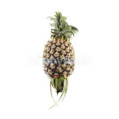 Josaphine Pineapple