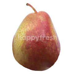 Corella Pear