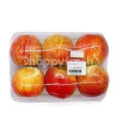 Royal Gala Apple (6 Pieces)