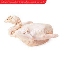 เอส-เพียว ไก่ตัว เอเอ
