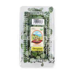 Living Organic Oregano