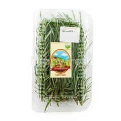 Living Organic Rosemary Leaves