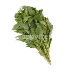 Natural & Premium Food Organic Holy Basil