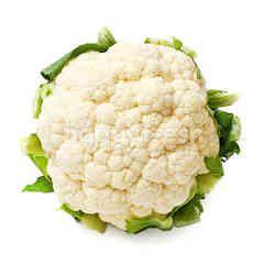 Zenxin Cauliflower