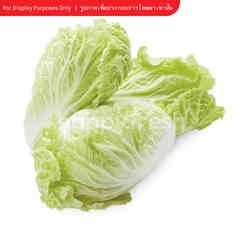 PPK Organic Chinese Cabbage