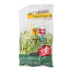 Amazing Farm Aeroponic Pakchoy