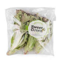 Sweet & Green Red Batavia Lettuce