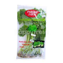 Parung Farm Bayam Hijau Aeroponik