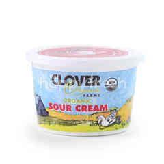 Clover Organic Farms Organic Sour Cream