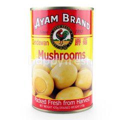 Ayam Brand Mushrooms