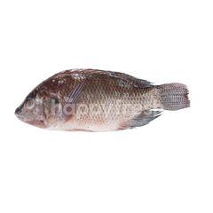 Sirikhun Tilapia Fish
