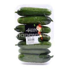 UM Picolino Cucumber