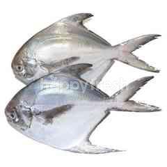 White Pomfret Fish (Ikan Bawal Puith)