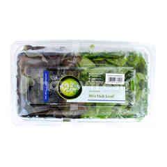 Amazing Farm Salanova Mix Oak Leaf Lettuce