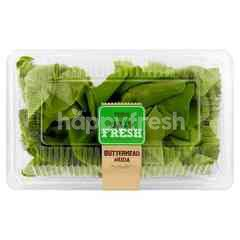 EAT FRESH Young Butterhead Lettuce