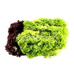 Mix Coral Lettuce