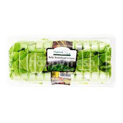 HIGHLAND FRESH Baby Butterhead Lettuce