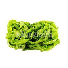 Food Farm Forest Butterhead Lettuce