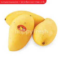 Gourmet Market Ripe Nam Dok Mai Mango