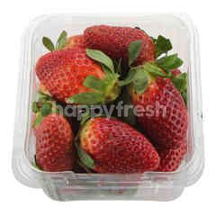 Korean Premium Strawberry