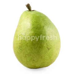 USA Green Anjau Pear