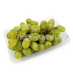 Green Grapes - Seedless