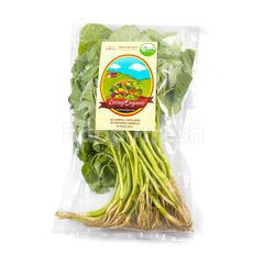 Living Organic Baby Spinach