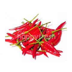 Red Chilli Padi (Cili Padi Merah)