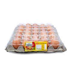 Kip Telur Ayam Negeri Alami