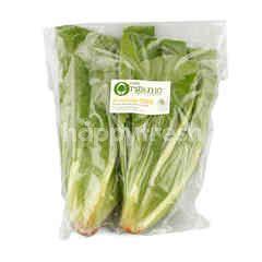 Tesco Organic Cos Salad