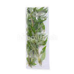 Eat Fresh Vietnamese Coriander (Daun Kesum)