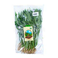 Living Organic Baby Organic Water Spinach