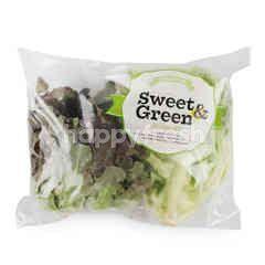 Sweet & Green Red Oak Lettuce & Green Oak Lettuce