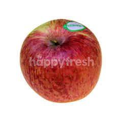 New Zealand Beauty Apple (8s Pieces)