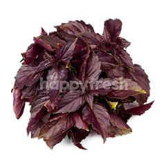Red Basil