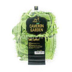 Cameron Garden Baby Spinach