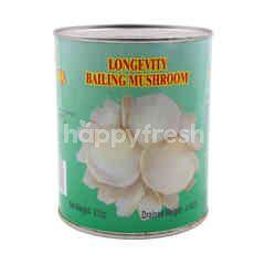 Haijishan Bailing Mushroom In Canned