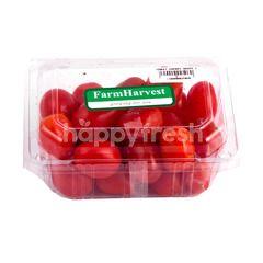 Farm Harvest Local Cherry Grape Tomato