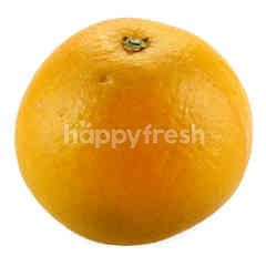 Eat Fresh Valencia Orange (8 Pieces)