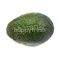 Australia Avocado C30