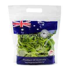 Seeds & Shores Australian Wild Rocket Salad