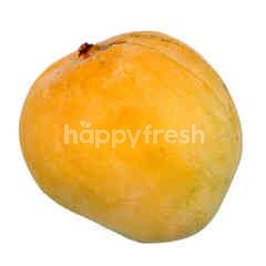 Rainbow Mango