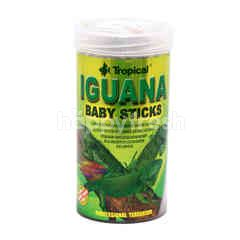 Tropical Iguana Baby Sticks
