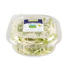 Natural & Premium Food Organic Sunflower Sprout