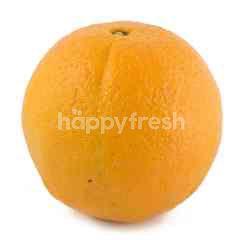 Egypt Navel Orange
