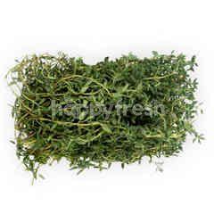 Lemon Thyme Herbs