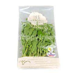 Wb Organic Holy Basil