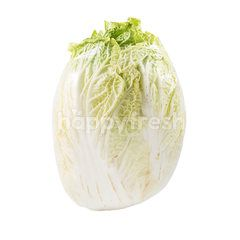 White Chinese Cabbage