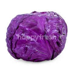 Imported Red Cabbage