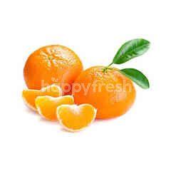 Local Mandarin Orange